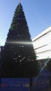 A Phenomenally Festive 40 FT Christmas Tree Has Arrived In Boscombe Time For The Holidays