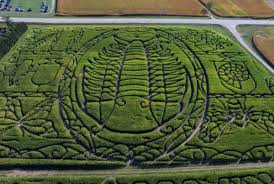 Best Pumpkin Patch Madison Wi by 100 Pumpkin Patch Madison Wi Dodge County Farm Has More