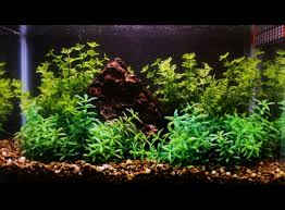 Aquascapes Design Modern — Unique Hardscape Design : Aquascape ... Home Accsories Astonishing Aquascape Designs With Aquarium Minimalist Aquascaping Archive Page 4 Reef Central Online Aquatic Eden Blog Any Aquascape Ideas For My New 55g 2reef Saltwater And A Moss Experiment Design Timelapse Youtube Gallery Tropical Fish And Appartment Marine Ideas Luxury 31 Upgraded 10g To A 20g Last Night Aquariums Best 25 On Pinterest Cuisine Top About Gallon Tank On Goldfish 160 Best Fish Tank Images Tanks Fishing