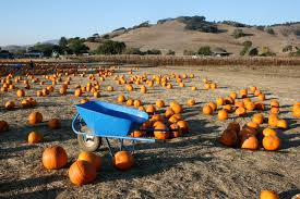 Pumpkin Patch Columbus Wi by 8 Charming Pumpkin Patches Around San Francisco