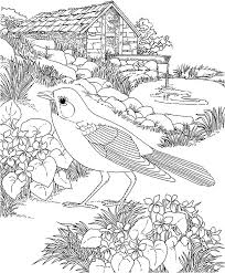 Free Printable Coloring PageWisconsin State Bird And Flower Robin Wood