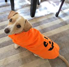 Things To Do On Halloween In Nyc by The Best Dog Treats And Tricks For Halloween Rover Com