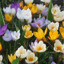 photos flowering bulbs to plant now