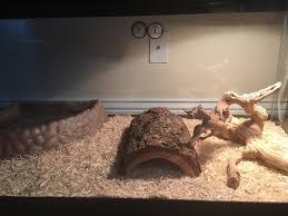 Ball Python Bedding by Please Help Me Perfect My Snake Tank I U0027m A New Ball Python Owner