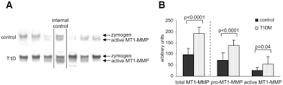Shedding Uterine Lining During Period by Mt1 Mmp Expression In First Trimester Placental Tissue Is