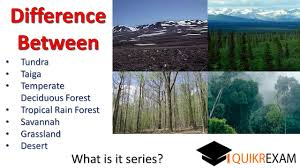 Earth Floor Biomes Desert by Difference Between Tundra Taiga Temperate Tropical Rain Forest