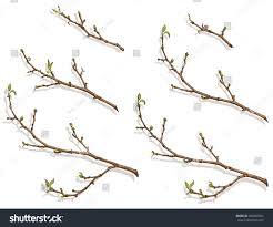 Spring tree branch with buds and small leaves Branches of different sizes Drawing