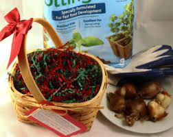 hyacinth gift basket etsy