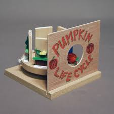 Stages Of Pumpkin Plants by Life Stages Plants Or Animals The Eli Whitney Museum And Workshop