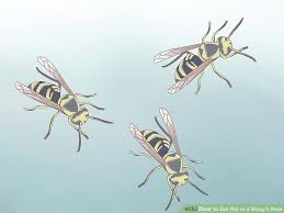 how to get rid of a wasp s nest with pictures wikihow