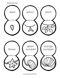 Stages Of Pumpkin Growth by Life Cycle Of A Pumpkin
