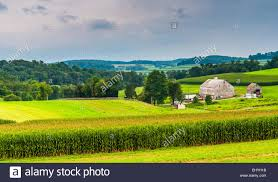 Corn Field And Barn On A Farm, In Rural York County, Pennsylvania ... The Barn On Bridge Partyspace Why Apples Futuristic 5 Billion Campus Has A Random Centuryold Barn The Farm I Grew Up In Fingerlakes Region Of New Crane Estate Best 25 Converted Ideas Pinterest Cabin Barns And Snow Covered Road Red Rural Area York Winter View Snow Field At Sunset Rocky Fork Creek Desnation Steakhouse Gahanna Oh Birch Trees Ptakan Round Snowy Winters Day