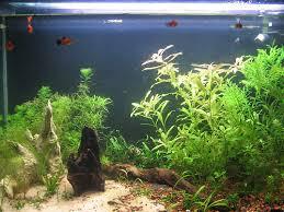 light bulb comparisons experiment lighting aquatic plant central