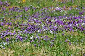 Pictures Of Native Plants In New England - Identification Aids Free Images Blossom Lawn Flower Bloom Backyard Botany Go Native Or Wild News Creating A Wildflower Meadow From Part 1 Youtube Wildflower Garden Update Life In Pearls And Sports Bras Budapest Domestic Integrity Field Of Wildflowers She Shed Decorating Ideas How To Decorate Your Backyard Pics Best 25 Meadow Garden Ideas On Pinterest Rockoakdeer Neighborhood For National Week About Texas A Whole Wildflowers For Tears The Duster Today Fields Flowers Design With Apartment Balcony