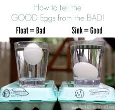 bad eggs float or sink 23 are eggs supposed to float or sink preschool easter activities