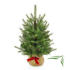 Artplants Artificial Christmas Tree WELLINGTON In A Brown Jute Bag 185 Branches 24