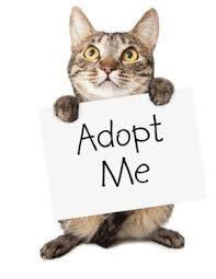 june is adopt a cat month harden ranch veterinary hospital