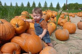 Best Pumpkin Patch Snohomish County by Seattle Corn Mazes And Pumpkin Patches
