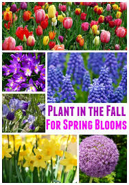 best 25 fall planting ideas on fall planting guide