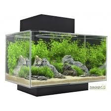acheter un aquarium pas cher poisson naturel
