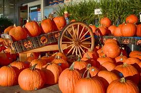Pumpkin Patch Lafayette Al by Things To Do In Chattanooga In The Fall