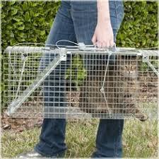 live cat trap havahart x large 2 door trap 42 l x 10 w x 13 h sturdy rust