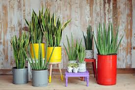 Plants In Bathroom Good For Feng Shui by Plants In Feng Shui Energy Generators In Your House мир фэн шуй