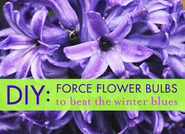 diy flower bulbs and seeds to beat the winter blues