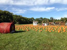 Pumpkin Patch Austin Texas 2015 by Pumpkin Patch At Suburban Lawn U0026 Garden Peanut And Phouka U0027s