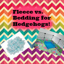 Vs Pink Bedding by Fleece Vs Bedding For Hedgehogs Youtube