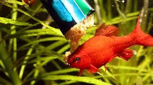 poisson eau douce aquarium tropical jbl plankton pur m 8 x 5g plancton frais et pur pour poissons d