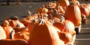 Pumpkin Patch Columbus 2015 by Pumpkin Patch Set Up Along Vann Avenue In Evansville 44news
