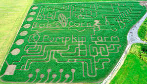 Snohomish County Pumpkin Patches by Tag Archive For