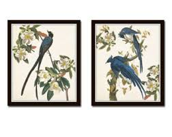 Blue Birds Print Set No 1 Botanical Prints Illustration Wall Art