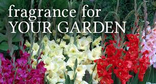 wayside gardens america s premiere source of choice plants and