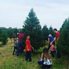 Cartner Christmas Tree Farm by Images Of Cut Your Own Christmas Tree Tn Halloween Ideas