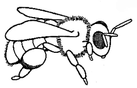 Baby Honey Bee Colouring Page Coloring