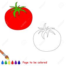 Contour Isolé Tomate Dessin à Colorier Image Vectorielle Filkusto
