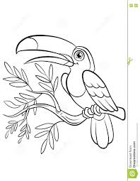 44 Toucan Coloring Pages Toucan Barbet Coloring Page