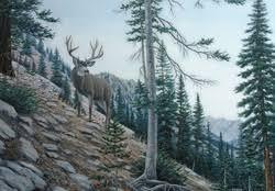 Animal Wallpaper Deer Wallpapers Download HD And Free