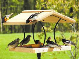 Birds Choice Wrought Iron & Cedar Fly Thru Bird Feeder