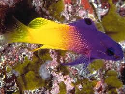 poissons eau de mer