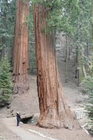 Lamp Liter Inn Hotel Visalia by Best 25 Sequoia National Park Hotels Ideas Only On Pinterest