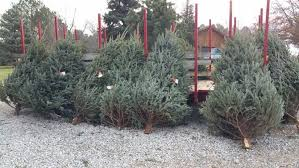 Pinecrest Christmas Tree Farm by 11 Places To Get Fresh Live Christmas Trees In Nebraska