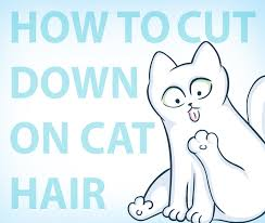 Excessive Hair Shedding In Cats by How To Remove Cat Hair From Your Clothes U2013 Hacks For Cats