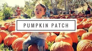 Kula Pumpkin Patch by 093 Pumpkin Patch Youtube