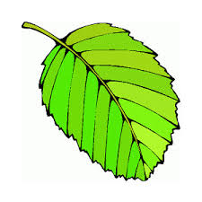 Leaves clipart animated 5