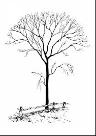 Magnificent Trees Without Leaves Coloring Pages With Tree And For Adults