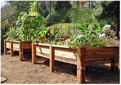 I Want To Grow A Vegetable Garden In My Backyard Im Thinking