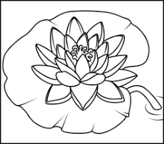 Marvellous Design Lily Coloring Pages Water